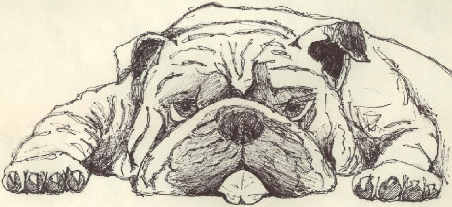 Pet Drawings Cartoon Bulldog Drawing By Askatrin Cute